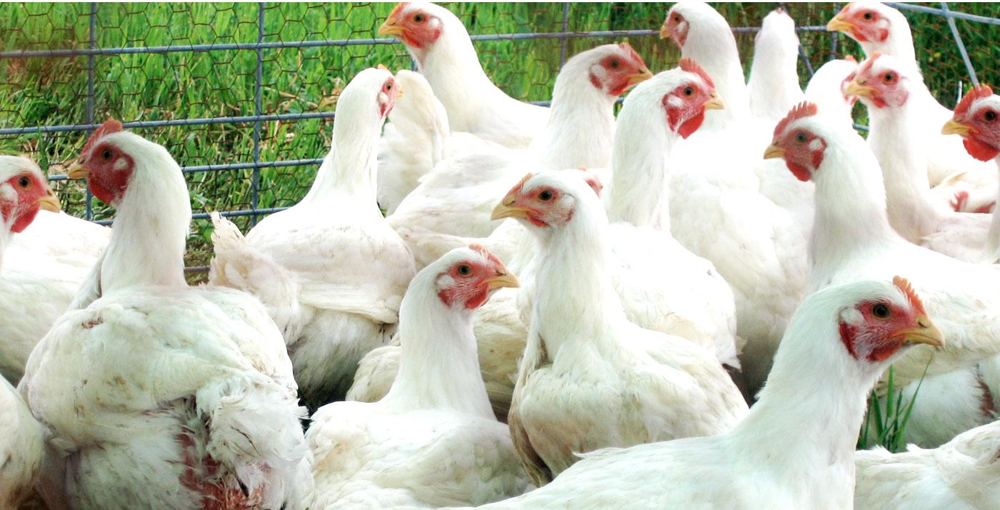 kippen-slider